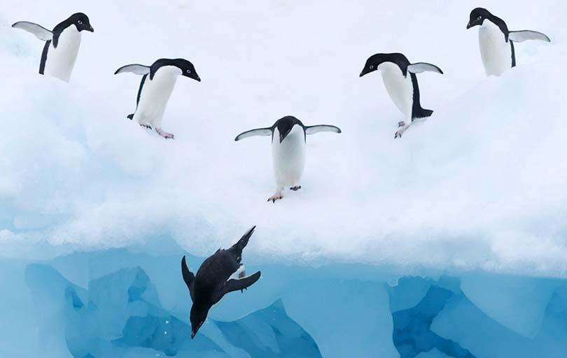 جریمه الگوریتم پنگوئن